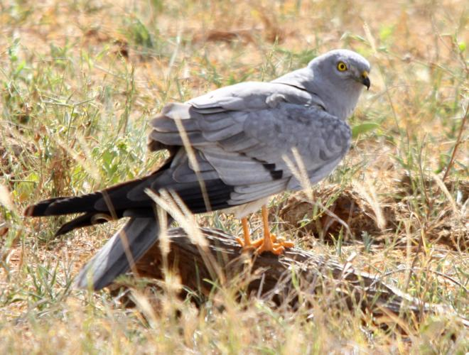Flickr - don macauley - Bird 015.jpg © Donald Macauley